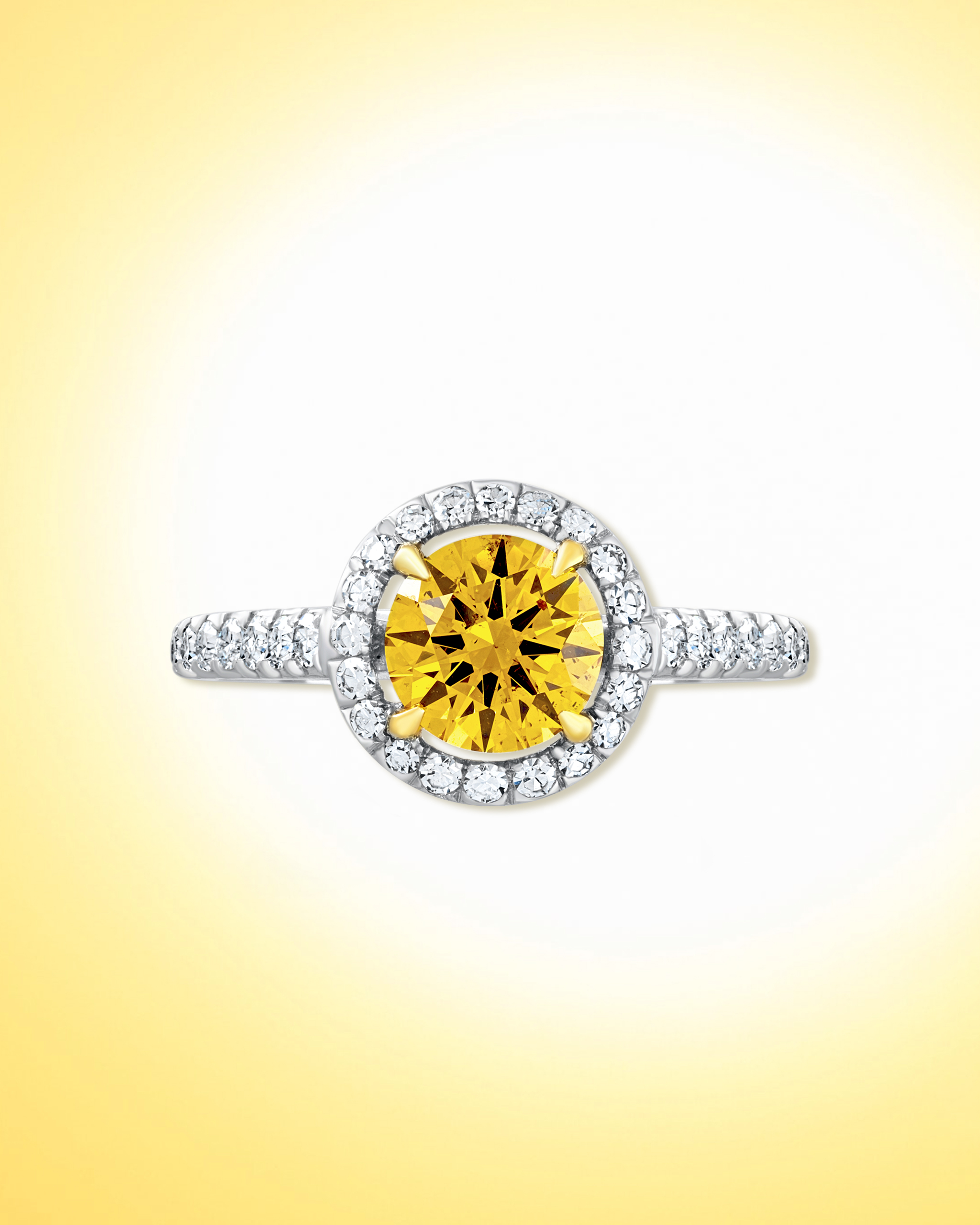 Round cut yellow diamond ring haloed by white pave diamonds on a platinum band from David Morris